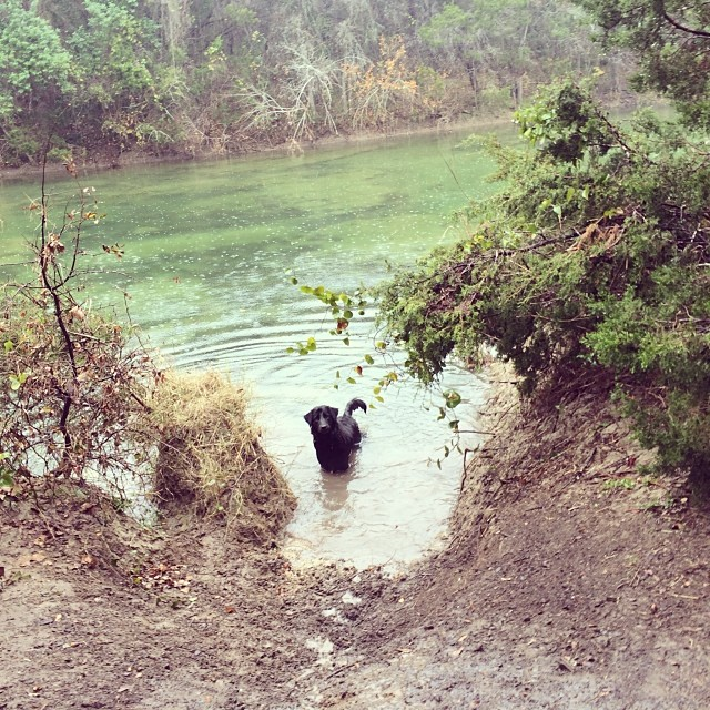 Audrey framed herself #thenakeddog #austin #hiking #boarding #training #atx #dogsofaustin #dogsofinstagram–posted by thenakeddog on Instagram