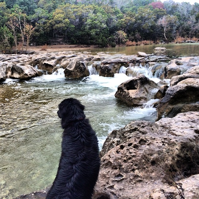 Audrey at the falls #thenakeddog #austin #hiking #boarding #training #atx #dogsofaustin #dogsofinstagram–posted by thenakeddog on Instagram