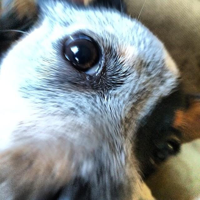 Puppy love #thenakeddog #austin #hiking #boarding #training #atx #dogsofaustin #dogsofinstagram–posted by thenakeddog on Instagram