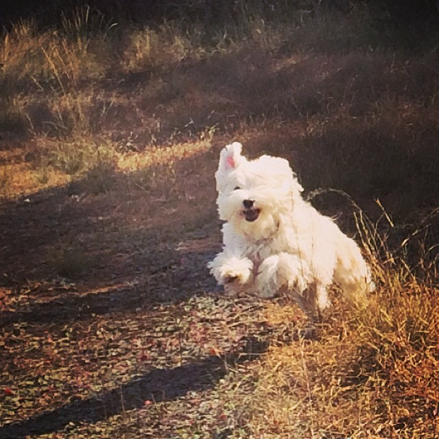 Even little Daisy let's loose for a romp on the trails! #thenakeddog #austin #hiking #boarding #training #atx #dogsofaustin #dogsofinstagram–posted by thenakeddog on Instagram