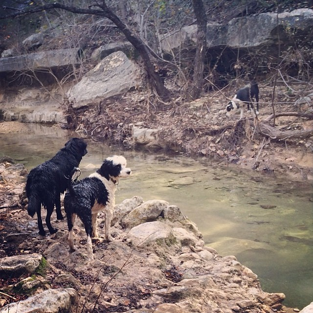 On opposite sides of Turkey Creek #thenakeddog #austin #hiking #boarding #training #atx #dogsofaustin #dogsofinstagram–posted by thenakeddog on Instagram