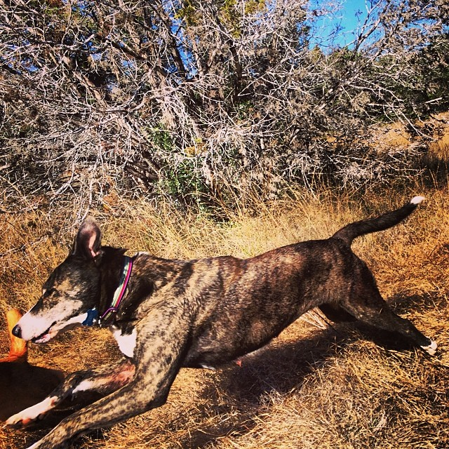 Charlie's first day as a Naked Dog! #newbie #thenakeddog #austin #hiking #boarding #training #atx #dogsofaustin #dogsofinstagram–posted by thenakeddog on Instagram