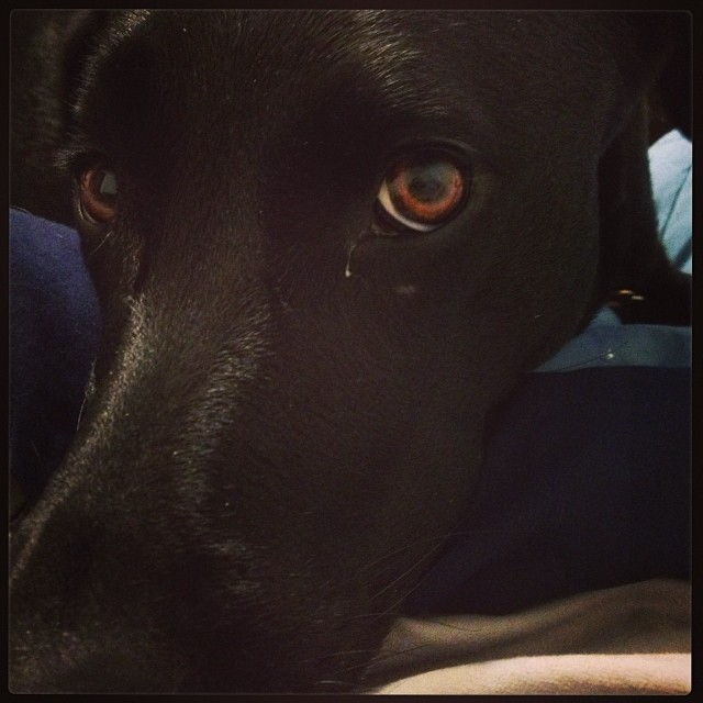 Pouty puppy doesn't want me to got to work. #poutypuppy #lovemykota #lovemylife–posted by tiggertex616 on Instagram