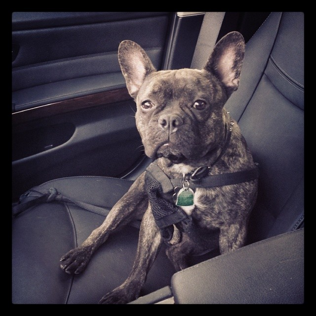 My copilot #atx –posted by ngrossling on Instagram