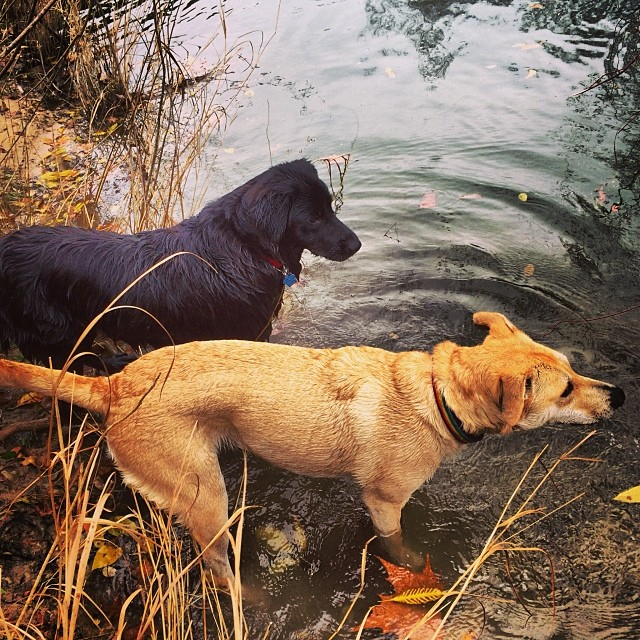 #thenakeddog #austin #hiking #boarding #training #atx #dogsofaustin #dogsofinstagram #bestfriends–posted by thenakeddog on Instagram