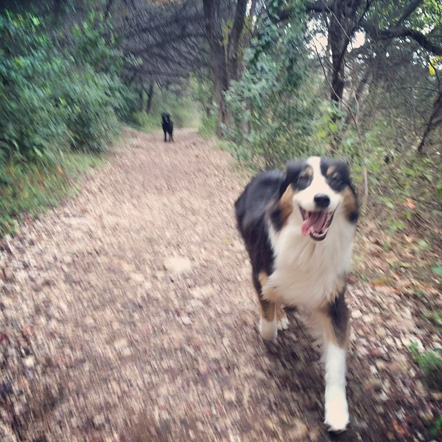 Cas on the trail #thenakeddog #austin #hiking #boarding #training #atx #dogsofaustin #dogsofinstagram–posted by thenakeddog on Instagram