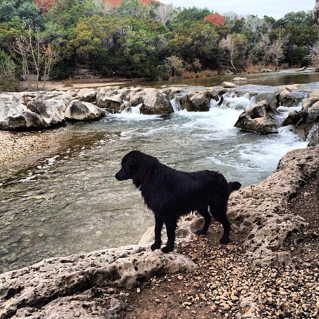 Audrey at Sculpture Falls #thenakeddog #austin #hiking #boarding #training #atx #dogsofaustin #dogsofinstagram–posted by thenakeddog on Instagram