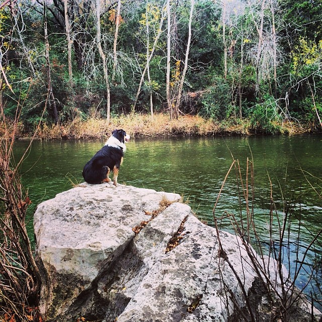 Cassie contemplating in the Greenbelt #thenakeddog #austin #hiking #boarding #training #atx #dogsofaustin #dogsofinstagram–posted by thenakeddog on Instagram