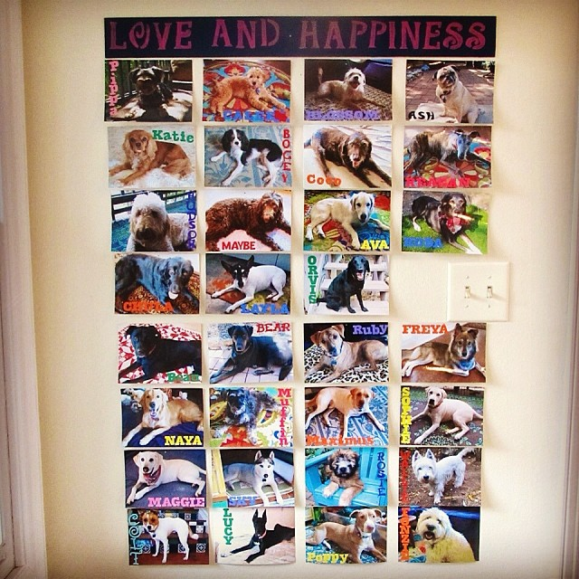 Time to start a new wall. Never thought I would fill this one. Crazy. Lots of sweet doggies. #adventuresindogsitting #dogvacay #dogs #dogsitting #dogsofinstagram #dogloversofinstagram #atx #austin –posted by loveandhappinessdogvacay on Instagram