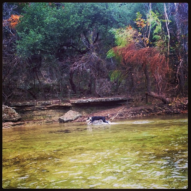 Z is such an athlete! Look at her go #thenakeddog #austin #hiking #boarding #training #atx #dogsofaustin #dogsofinstagram–posted by thenakeddog on Instagram