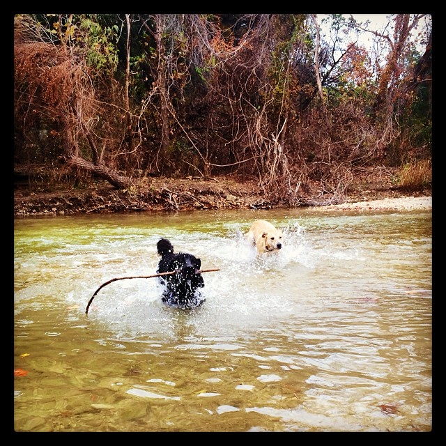 Audrey & Dallas - instantly #bestfriends #thenakeddog #austin #hiking #boarding #training #atx #dogsofaustin #dogsofinstagram–posted by thenakeddog on Instagram