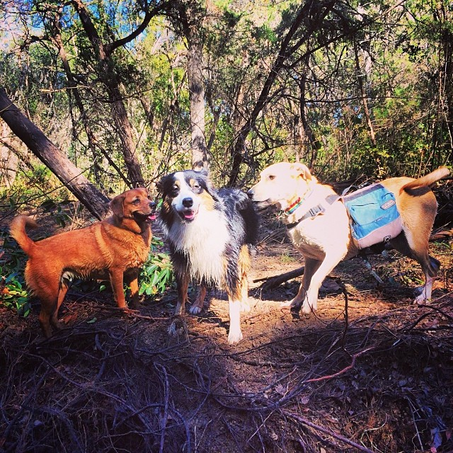 Pups posing #thenakeddog #hiking #training #atx #austin #dogsofaustin #dogsofinstagram #bestfriends–posted by thenakeddog on Instagram