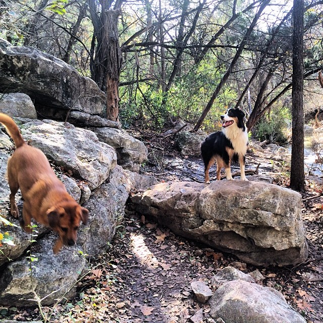 Pups on peaks #thenakeddog #dogsofaustin #dogsofinstagram #hiking #training–posted by thenakeddog on Instagram