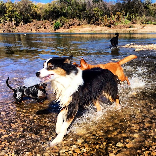 Pups at the beach #thenakeddog #atx #austin #dogsofaustin #hiking #boarding #training–posted by thenakeddog on Instagram