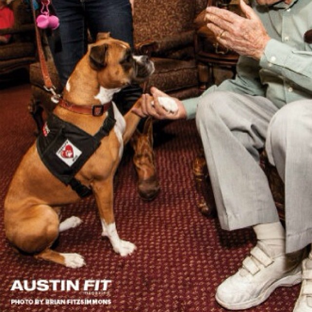 Miss Addison says hello to an elderly gentleman at a nursing home. Not only is Addison a wonderful therapy dog, she was also profiled in Austin Fit magazine as one of Austin's Fittest Dogs. We are happy to have Addison on our team!–posted by austindogalliance on Instagram