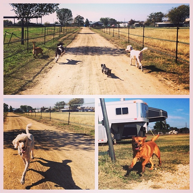 Pups playing at the farm #atx #austin #dogsgiving #dogsofaustin #thenakeddog #boarding #training #texas–posted by thenakeddog on Instagram