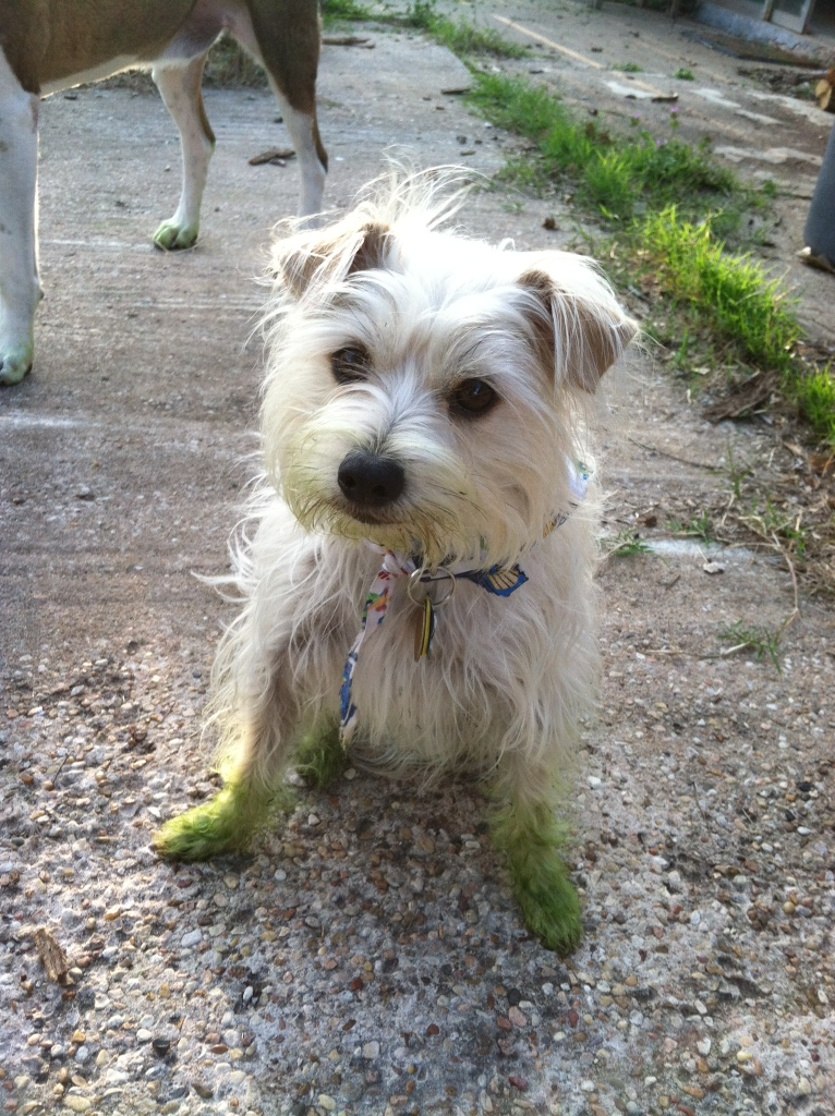 Beware freshly mowed grass.