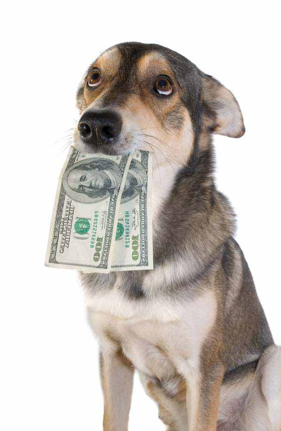 Wanna make an easy $100?? Tammadge Market Research is looking for dog owners to participate in a research discussion group the week of January 23rd.   The groups are 90 minutes long and are held at our offices on Barton Springs Road.   Participants will be given $100 at the end of the discussion group.   There are 12 different groups and each group is a little different – we have about 5 minutes of questions to ask so that we can determine if you qualify and for which group.   Please call us at 512-474-1005 as soon as you can and ask to be screened for the dog studies. We will fill these groups on a first come, first served basis.   And please feel free to forward this email along to other dog owners.