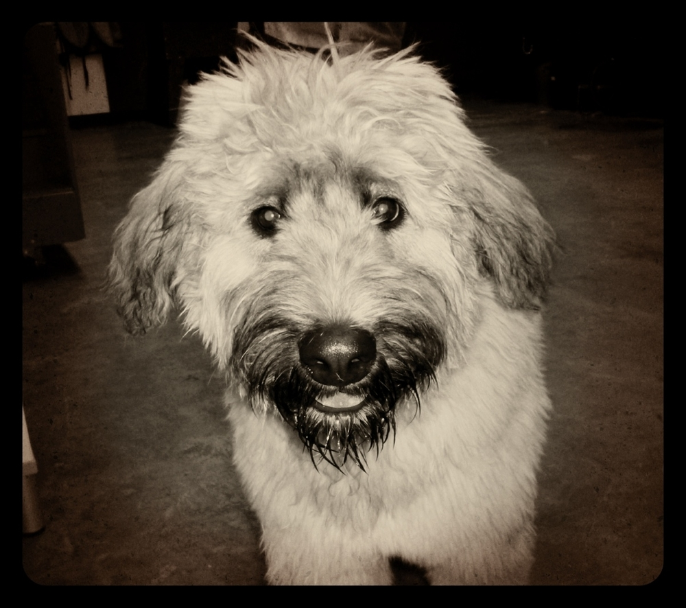 If you think Yogi looks cute here, you should have seen him AFTER his bath! Love.
