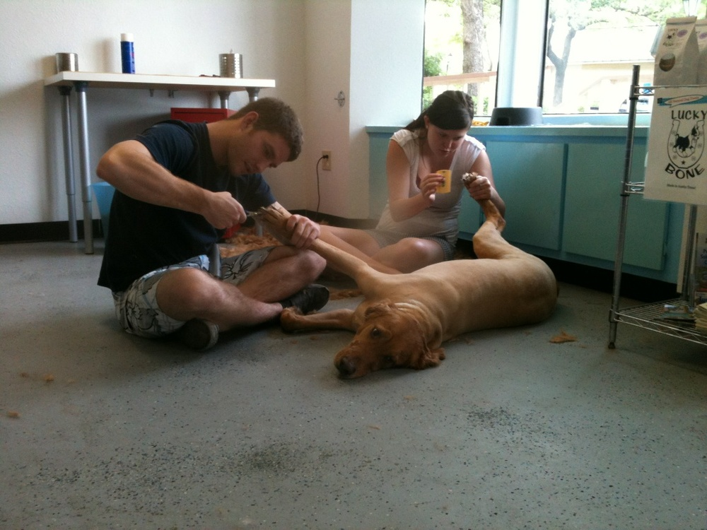 Jake's owners are giving him the royal treatment. He doesn't seem to mind :)