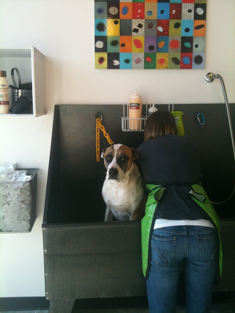 Scout does not seem very impressed with the new shop :)