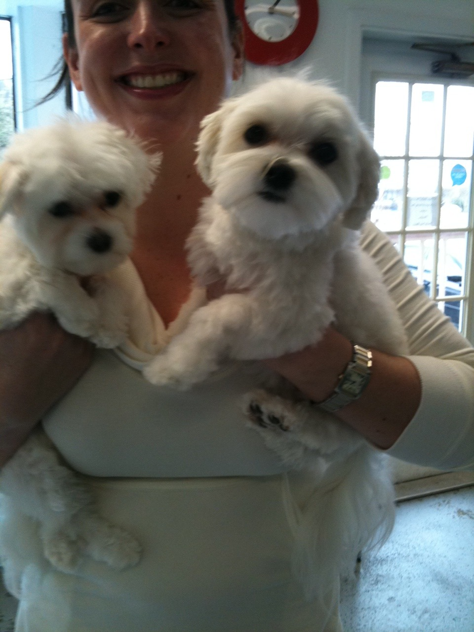 Tink & Izzy are so cute and prove how hard it is to get TWO pups to look at the camera! @bellebellebeau