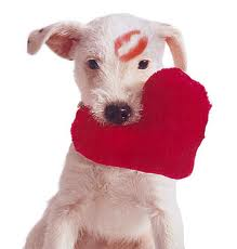 Happy Valentine's Day to all our furry friends and their people! We LOVE you!! xoxo