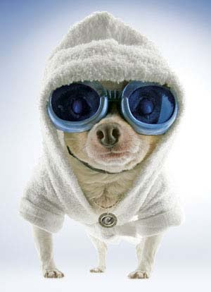 "Googled ""cold dog"". Found this. LOL!!!"