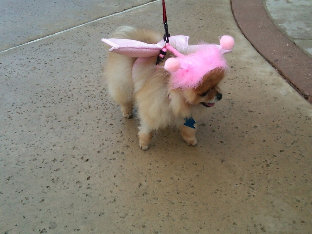 OMG. First costume sighting at Dogtoberfest.