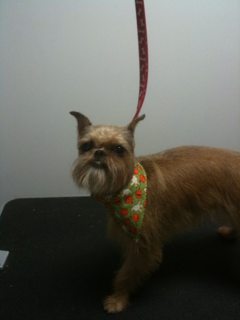Eewee is a Brussels Griffon and Laura at the downtown shop has fallen in LOVE!