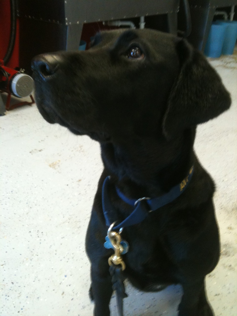 """Farlee is an """"explosive detection canine"""". At the moment, she's detecting a treat."""