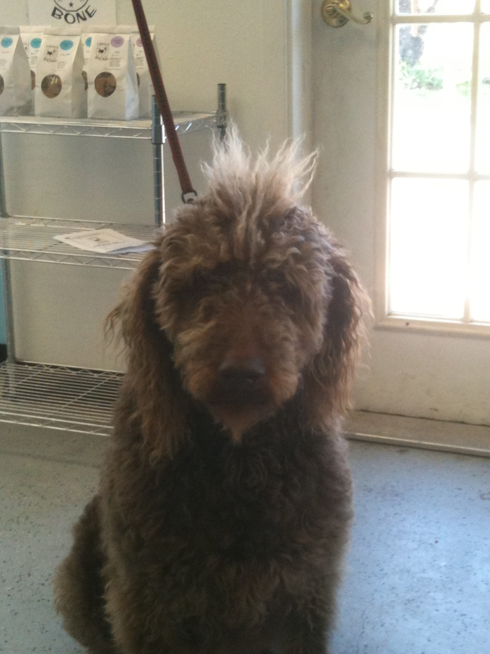 Check out Brickly's mohawk. Reminds me of a Dr. Seuss character :)