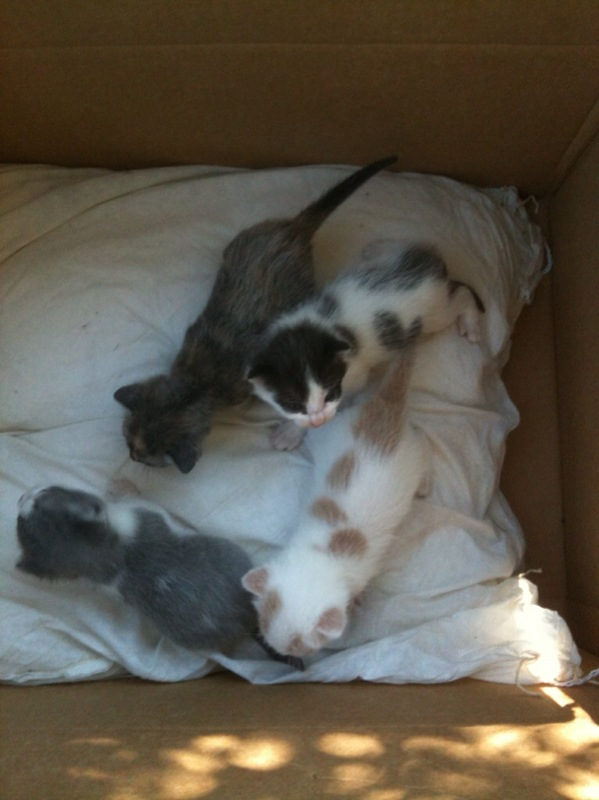 EMERGENCY! Alesha just found these babies in her garage. Anyone want a kitten???