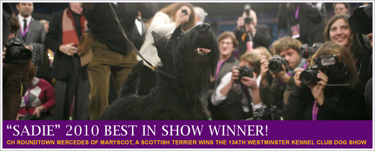 And the winner is…..SADIE! She's a Scottish Terrier and the top dog at this year's 134th Westminster Kennel Club dog show. Congrats, Sadie! For more pictures, videos, etc click on the picture above…