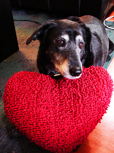 Share the Love! Bring an item from Austin Pets Alive's wishlist to any of our shops from Friday-Sunday and receive $2 off your self-serve wash or 10% off your scheduled grooming appointment.  Happy Valentine's Day, y'all!