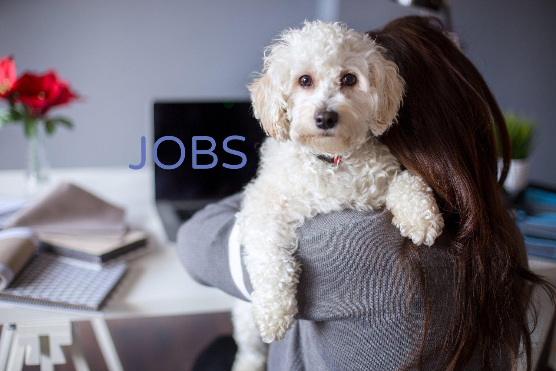Jobs dirty dog grooming self serve dogwash solutioingenieria Images