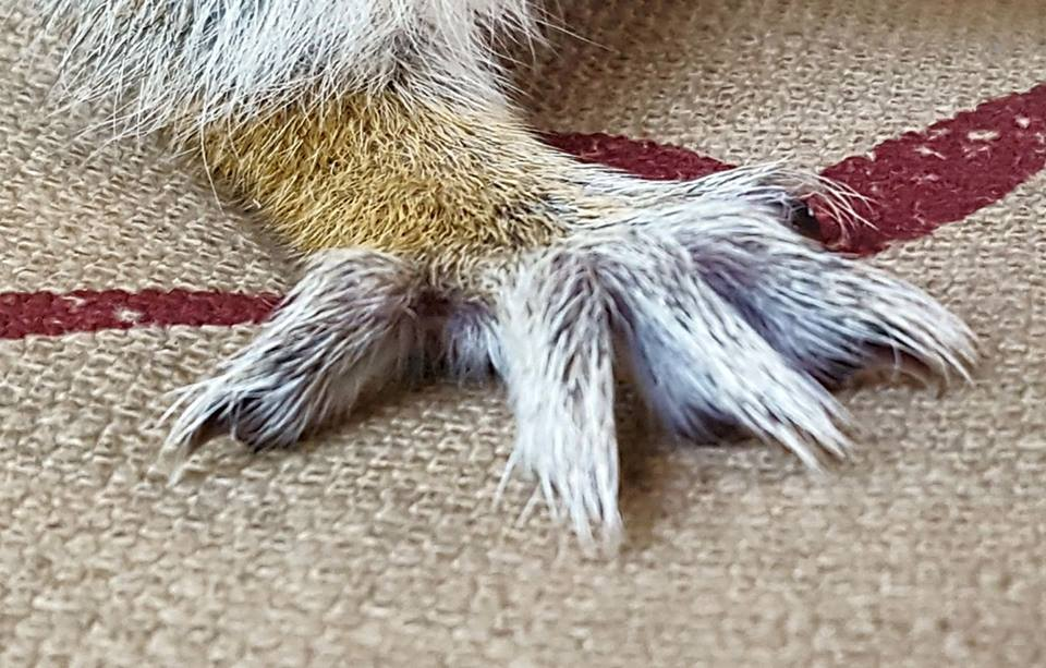 Fred's Mighty Talons.