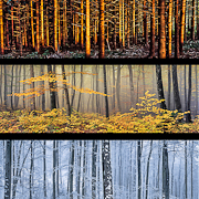 forest_seasons-2
