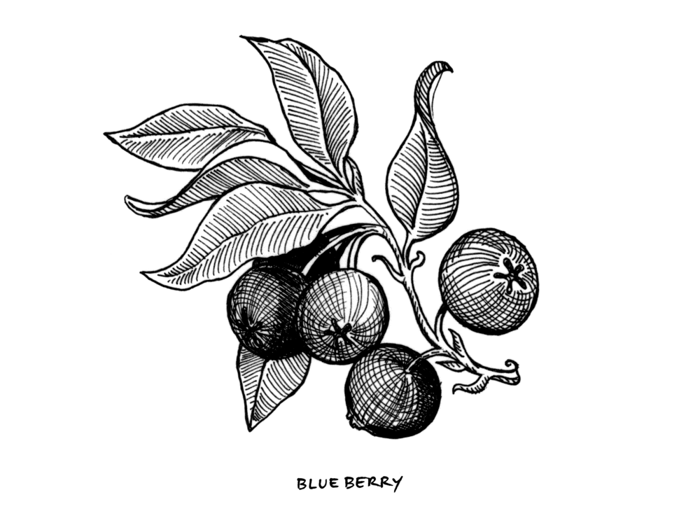 Blueberry_StrainArt.png