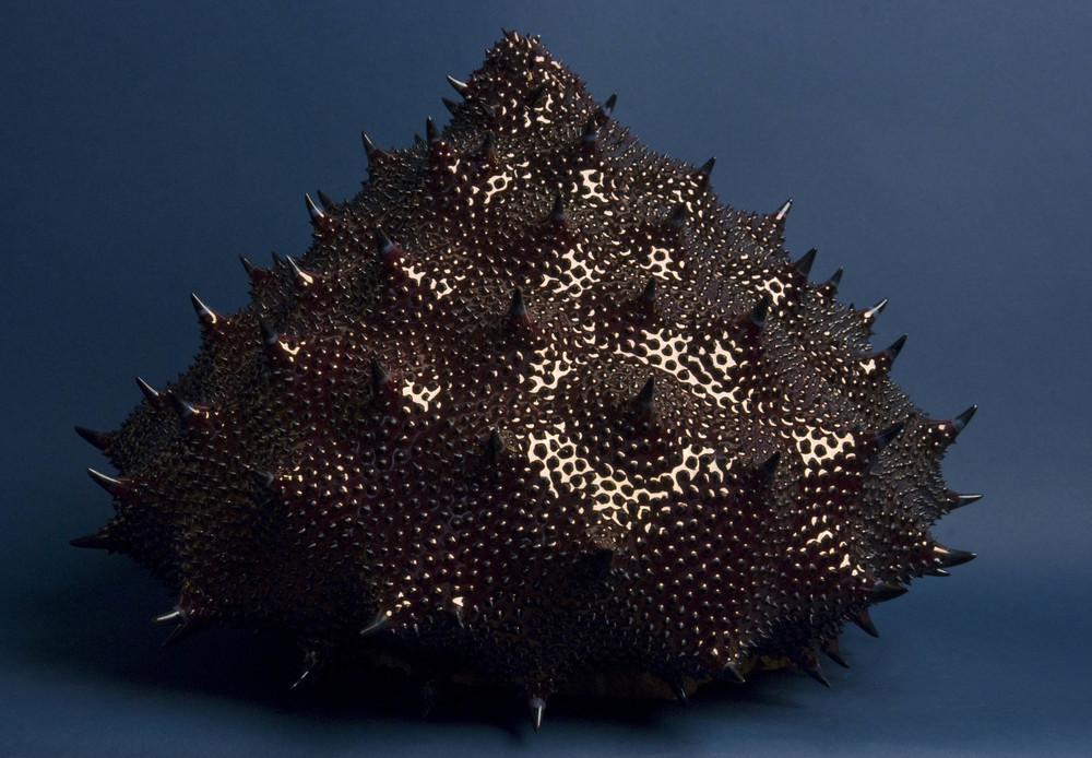 Shane Keena    Strongylocentrotus Purpuratus (ball of spines)  , 2008 Multi-fired earthenware, luster, China paint 15 x 19 inches  /  38.1 x 48.3 cm  /  SKe 2