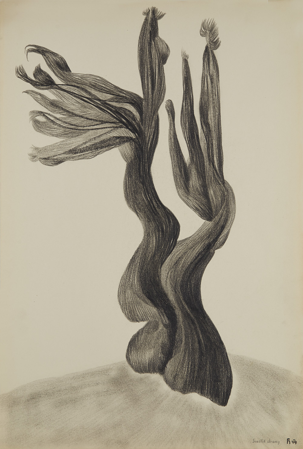 Karel Havlíček  Srostlé stromy / Fused Trees  , 1949 Pencil on paper 16.54 x 11.81 inches 42 x 30 cm KHav 26