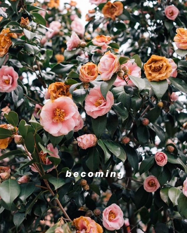 WHAT DO YOU 💗MOST ABOUT WHO YOU ARE BECOMING?🌸🌸🌸