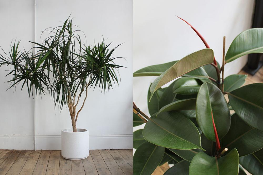 palm1b.jpg