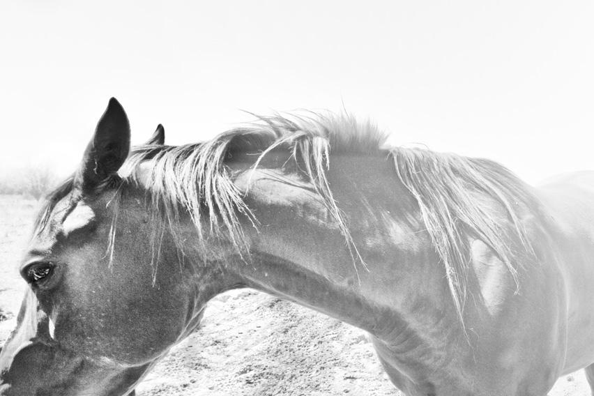 8_rillito_horse.jpg
