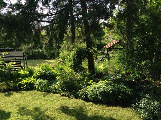 Del III) Klockbusken,  Enkianthus campanulatus , Stor häxal,  Fothergilla major, skuggblad, Strutbräken och Amerikanskt hönsbär,  Cornus Canadensis.