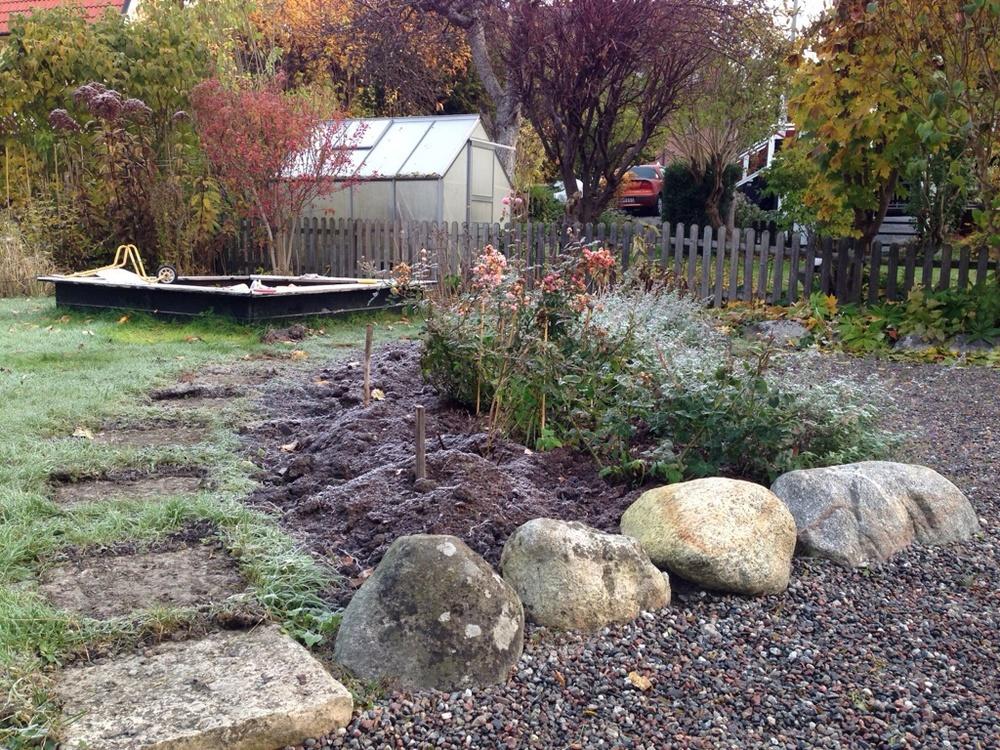 Senhösten 2105: Den gamla halvmåneformade rosrabatten är inramad med stora rejäla stenbumlingar (en kvarleva från när trädgården ursprungligen anlades på 1930-talet).