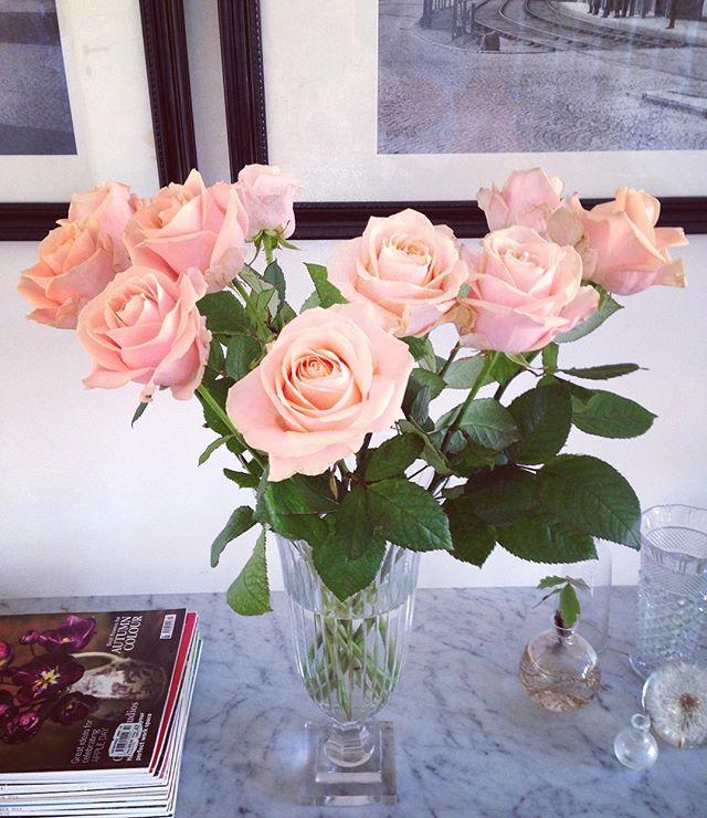 "Firar alla hjärtans dag med ett fång blekrosa Avalange rosor, samma som i min brudbukett, ""many years ago"". [Celebrating Valentine's Day with an armful of pale pink roses Avalange, the same as in my bridal bouquet, many years ago.] #allahjärtansdag #happyvalentinesday  #avalangeroses"