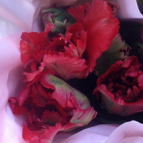 Äntligen börjar tulpanerna spricka ut i blom. [At last the tulips begin to burst in the garden.] #tulpaner #tulips