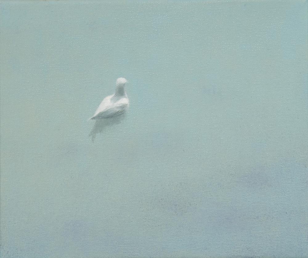Lone gull swimming