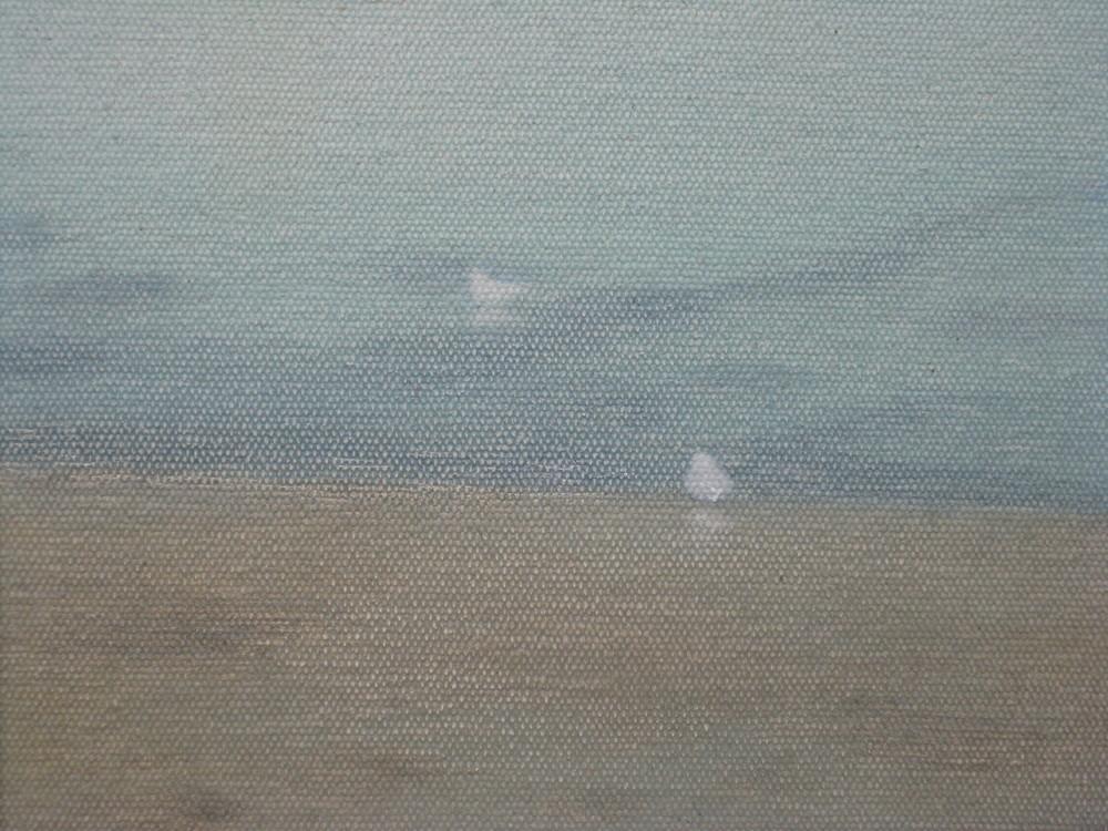Gull, summer, Newlyn